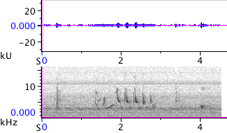 Waveform & Spectrogram of American Goldfinch