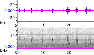 Waveform & Spectrogram of Chestnut-backed Chickadee