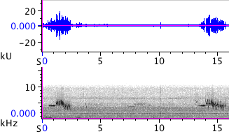 Waveform & Spectrogram of White-crowned Sparrow